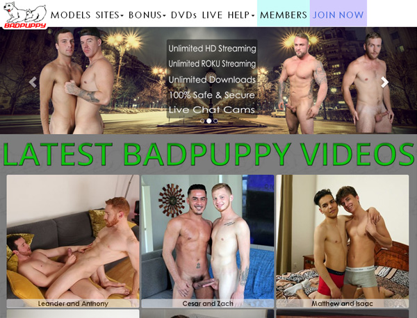 Badpuppy Sets